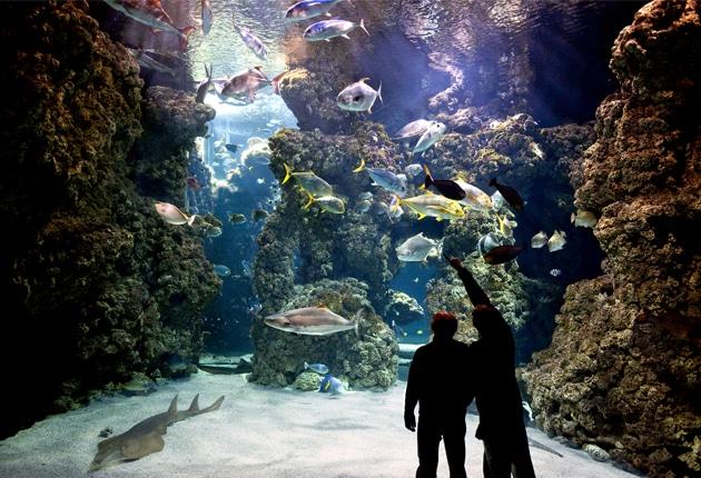 o que fazer em Mônaco museu oceanografico
