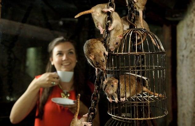atrações turísticas mais sujas rato londres