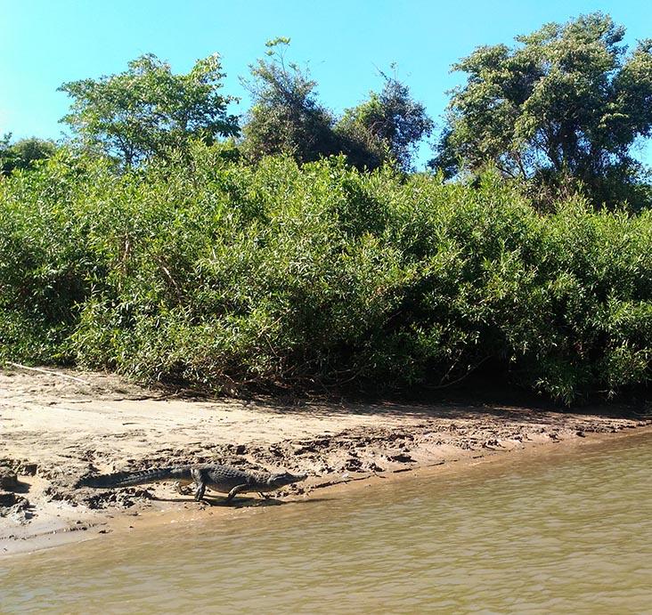 jacare rio aquidauana pousada aguape guia do estrangeiro